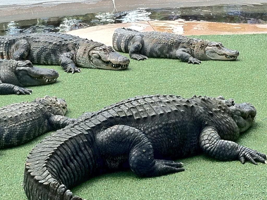 Reptile Gardens Review Rapid City South Dakota Travel Goal Getter